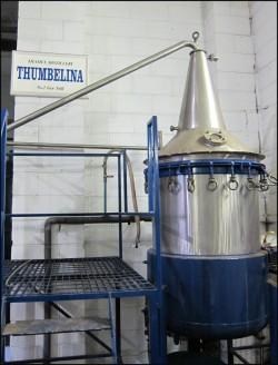 GinRamble Thumberlina