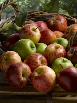 Cp tillington apples pic